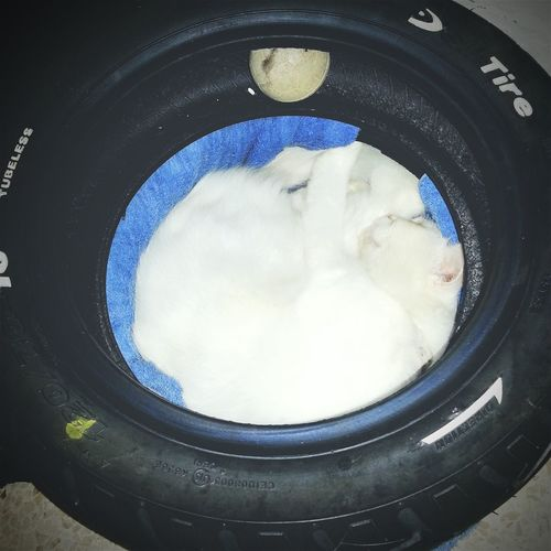 ...good night from Jon I Love My Cat Cat Lovers Catoftheday Relaxing Samsung Galaxy S III EyeEm Indonesia Tire My Smartphone Life Circles In Circles Sleepyhead