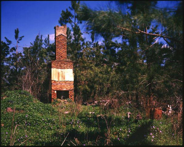 4x5  Color Film View Camera Large Format Velvia50 Filmisnotdead