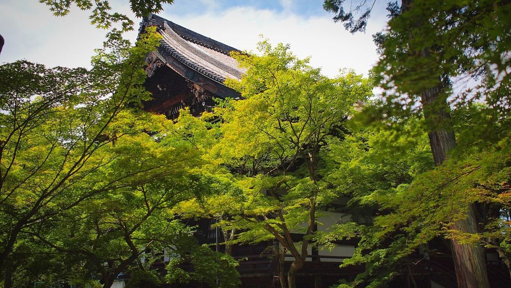 真如堂 Kyoto,japan Tranquil Scene Travel Destinations Japan Photography Plant Tree Growth Nature Sky Green Color No People Beauty In Nature Day Tranquility Architecture