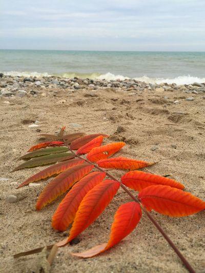 Fall Beauty
