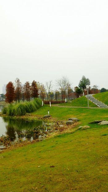 Marshland  At The Park At Wuxi China