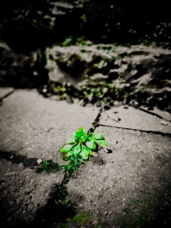 part üstliches Grünzeug Green Me HERO Cement Beton Grau Grey Gehweg Footpath Wayfinder Insect Close-up Green Color Plant Paving Stone Water Drop Greenery Countryside