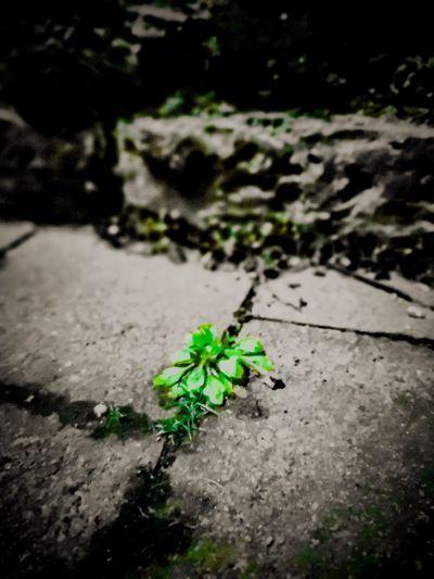 part üstliches Grünzeug Green Me HERO Cement Beton Grau Grey Gehweg Footpath Wayfinder Insect Close-up Green Color Plant Paving Stone Water Drop Greenery Countryside The Street Photographer - 2018 EyeEm Awards