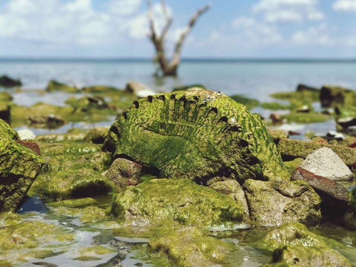 Presa Vicente Guerrero en Padilla, Tamaulipas, México. Water Nature Outdoors Beauty In Nature Close-up