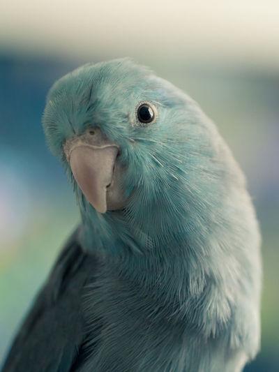 Close-up portrait of bird