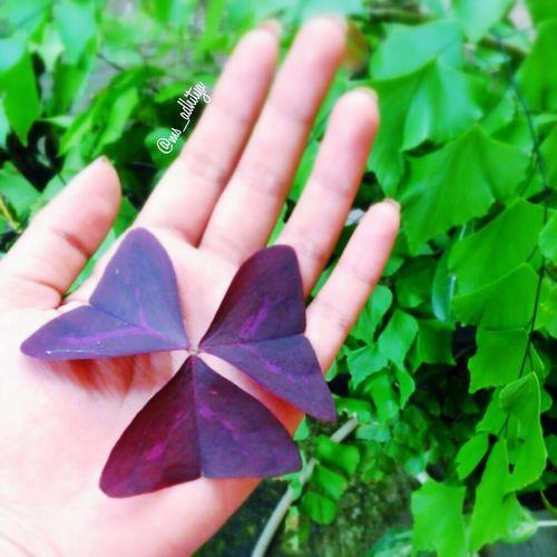 Hands Flowers,Plants & Garden Open Edit EyeEm Indonesia Taking Photos Hello World Popular Photos