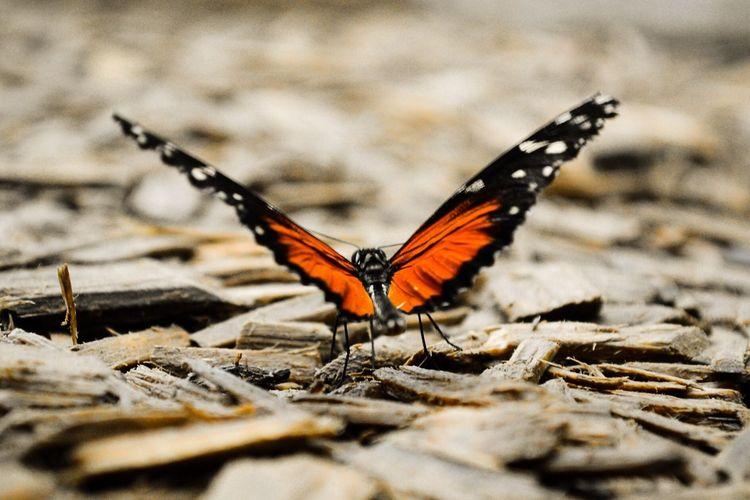 Butterfly Animals Nature Orange