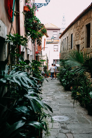 Calm little alley in the middle of Porto Architecture Building Exterior Built Structure Building Residential District House City Day Plant Nature Footpath Direction The Way Forward Narrow Street Outdoors Growth Potted Plant Incidental People Men Alley Traveling City Street