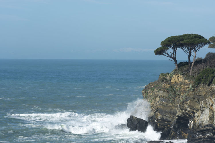 Coast Line with a Tree in Liguria, Italy. Coastline Mediterranean  Mediterranean Sea Rock Rock Formation Sunny Tranquility Travel Tree Wave Coast Color Day Famous Place Full Frame Horizon Over Water Mountain No People Outdoors Sea Sky Travel Destinations Water Waterfront