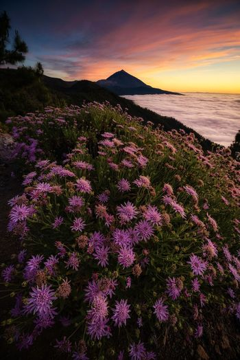 Volcano, flowers and clouds EyeEm Best Shots EyeEmNewHere EyeEm Selects EyeEm Nature Lover EyeEm Gallery Sunlight Volcano Cloud - Sky Nature Nature_collection Mountain Springtime Scenics Scenics - Nature Petal Flower Head Flower Sunset Tree Water Purple Sky Landscape Plant Wildflower Blooming The Great Outdoors - 2019 EyeEm Awards