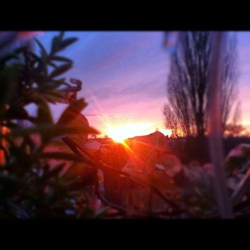 #berlin #sky #himmel #sun #sonne #sunset #sonnenuntergang #horizon #horizont #nevember #fall #autumn #herbst #blue #blau #red #rot #leaves #laub #blätter #tree #baum #evening #abend Sky Baum Leaves Blau Abend Nevember Tree Blue Sonnenuntergang Autumn Fall Red Herbst Himmel Berlin Horizon Sun Blätter Sunset Laub Sonne Rot Evening Horizont