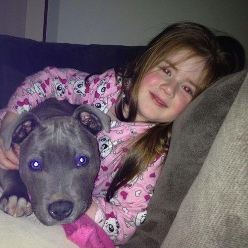?? Sbt Staffy Staffysmile Staffysofinstagram staffordshirebullterrior puppybestfriends instapaws bluestaffy blueenglishstaffy