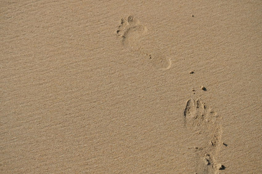 Absence Animal Track Arid Climate Backgrounds Beach Beige Brown Day FootPrint Full Frame High Angle View Land Mystery Nature No People Outdoors Pattern Paw Print Print Sand Track - Imprint Tranquility