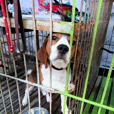 Darwin...Beagle dogy...Kamerahpgw_Kupang Kamerahpgw Xtraordinarynoya