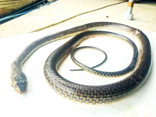 งู...ผ่านมาพอดี Animal Close-up Spiral Staircase Spiral Snail Gastropod Animal Shell Seashell Mollusk Wire Wool Razor Wire