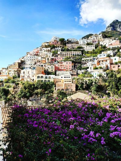 Flower Flowers Stunning Travel Destinations Travel Travel Photography Positano Postcard View Coast Streetphotography Italy Panorama Colorful Point Of View Photography Photographer Photo Violet Flower Mountain Pixelated House Sky Architecture Landscape Blooming Village In Bloom Blossom