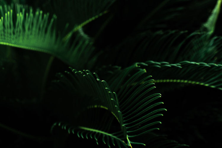 Dark green leaves in the garden. green leaf texture. nature abstract background. tropical forest.