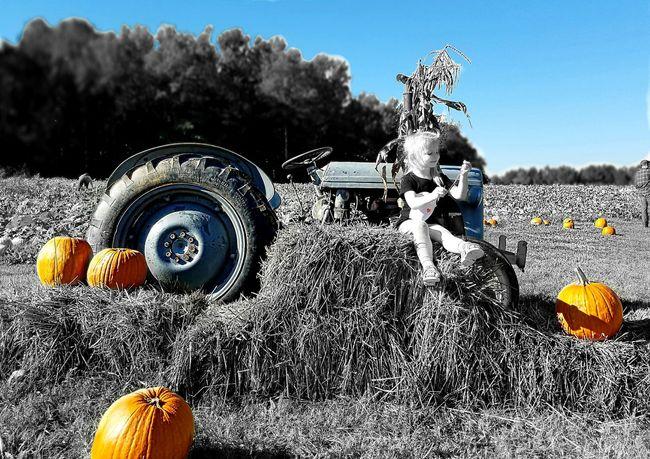 Focus On Foreground Tree Outdoors Day Pumpkin Fall Children Photography PumpkinPatch🎃 Pumpkin Season