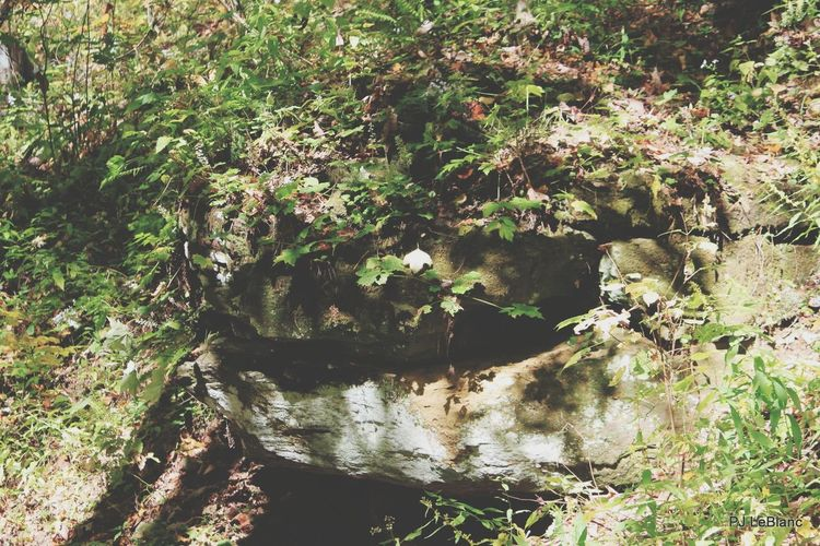 Taking Photos Outdoors Nature Rock Formation Can You See The Snake Head Did It My Way Hello World