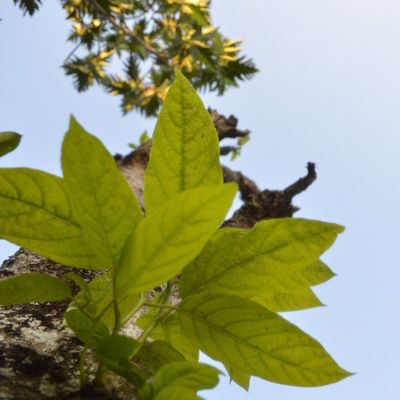 The beauty of nature. Taken by nikon d3200 Nature INDONESIA Leaves Tree relax