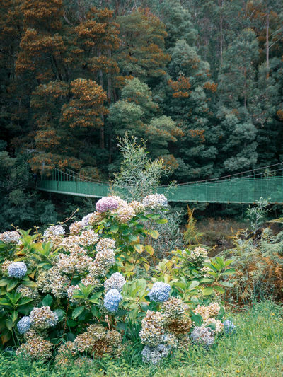 View of flowering plants by trees in forest