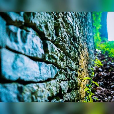 """Spotlight"" Hidden world of Wanderlust Settingsun Productionlife Focus Justgoshoot Uncalculated SonyA7s Tennessee Tn Sunset Shootermag Visualarchitects Agameoftones Focused Lightinspired"