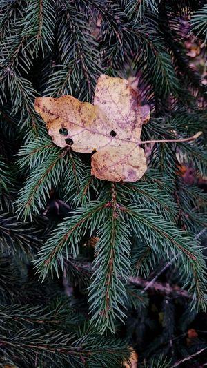 Peace Forest Walks Leaves Autumn Leaves Autumn First Eyeem Photo