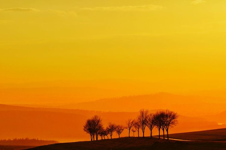 Silhouette trees on field against orange sky