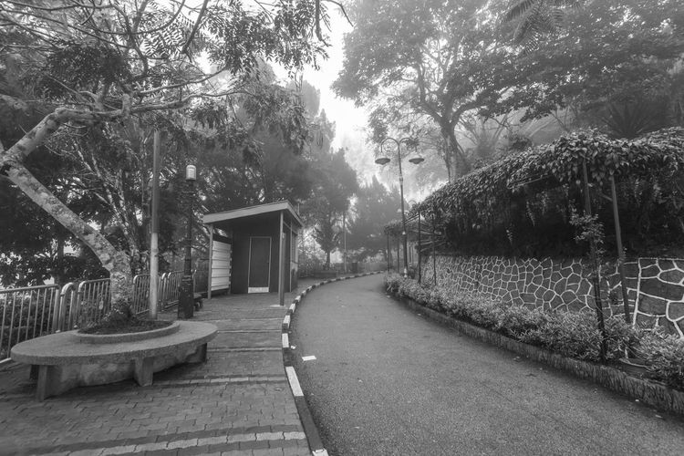 Foggy misty road indicating haunted in Penang Hill Tree Plant Direction The Way Forward Nature No People Growth Day Outdoors Footpath Penang Penang Malaysia Penang Island Architecture Built Structure Building Exterior Empty Bench Park Building Seat Absence Park - Man Made Space