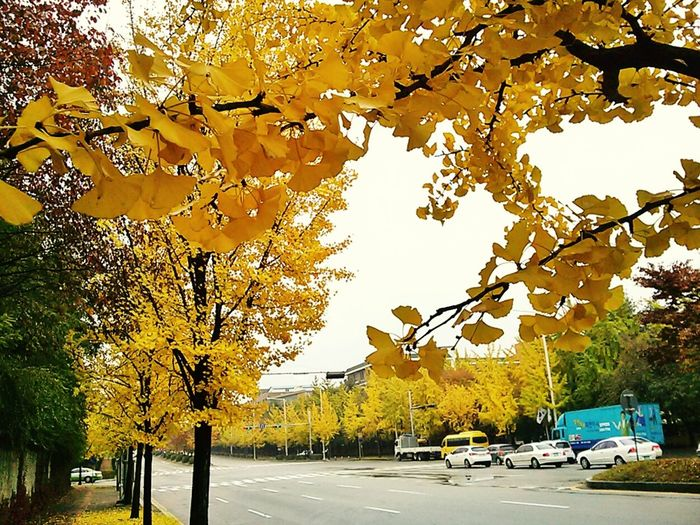Yellow Colors Of Autumn