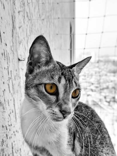 Cat Teampixel Pixel Google Pixel Cat Animal Bnw Pet Wallpaper Eyes Fur Cute Pose EyeEm Selects Portrait One Animal Pets Close-up Day Mammal Feline Domestic Animals No People Animal Themes
