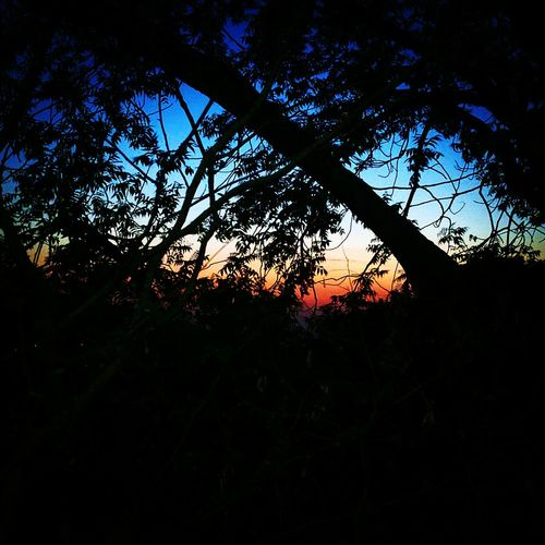 Hello World India Indiaclicks Himalayas Sunset_collection Forest Photography First Eyeem Photo
