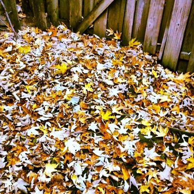 Feels like my leaf sweeping osh never-ending this Fall!