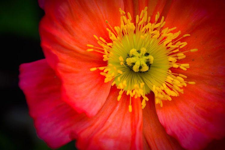 Natural beauty. Stalking flowers at Golden Gate Park. San Francisco Urban Nature Beautiful EyeEm Best Shots Flowers Nature Getting Inspired