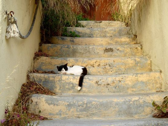 Rhodes Rhodes Old Town, Greece Rhodes Greece Black&white Old Town Rhodes Cats Sleeping Cat Cat Architecture Cat On The Wall Sleeping Sleepy Black And White Cat Kitten Blackandwhitecat Cutecats Cutecat Cute Cats Sleepy Cat It's A Cats Life It's A Cat's World Black And White Blackandwhite Cat Love Pink Paw