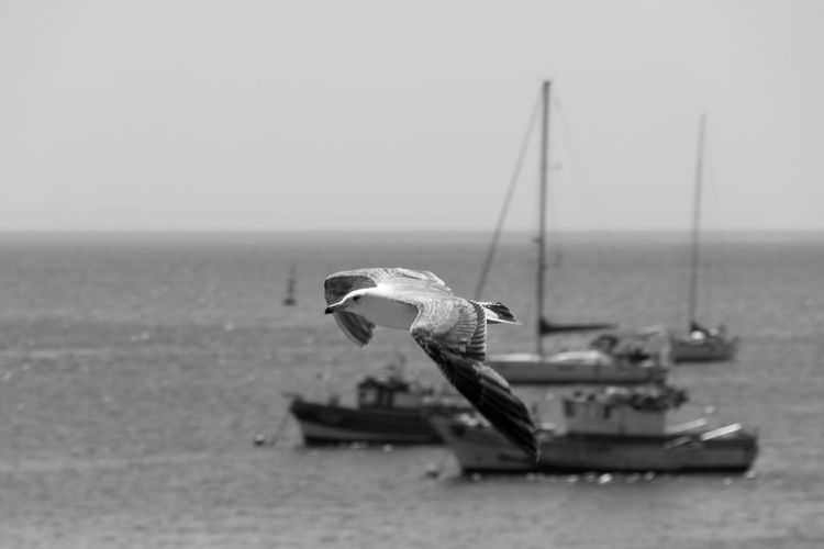 Animal Themes Animals Bird Bird Photography Birds Of EyeEm  Birds_collection Birdwatching Black & White Black And White Blackandwhite Blackandwhite Photography Bnw Eye4photography  EyeEm EyeEm Best Shots EyeEm Bnw EyeEmBestPics Monochrome Seagull SEAGULL IN FLIGHT Seagulls Seagulls And Sea