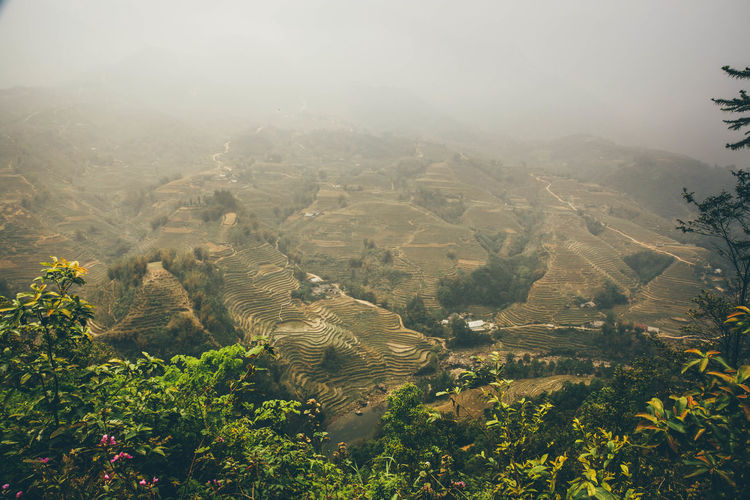 Scenic view of rice terrace during foggy weather