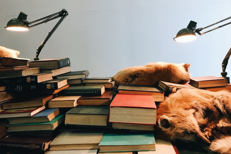 Books PhonePhotography Fox No People Indoors  Lighting Equipment Stack Animal Themes