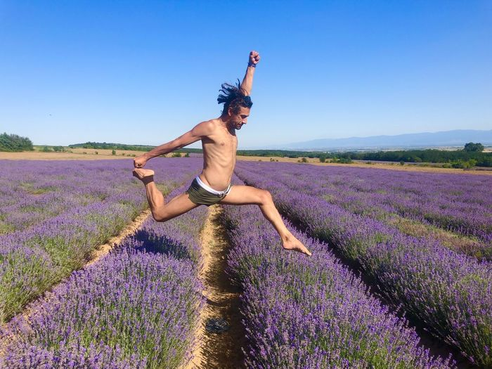 Jump in the lavender