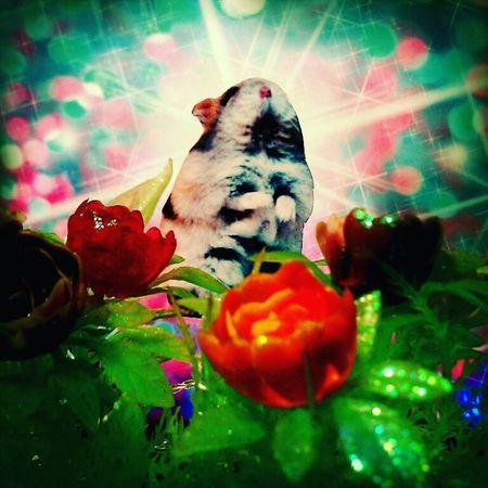"""Kitschy"" Kitschy Hamster Cute Art Flower Flowers Roses Rosé Red Green Pink Colorful Trashart Trash Belanglose Bilder Unaffected Images"