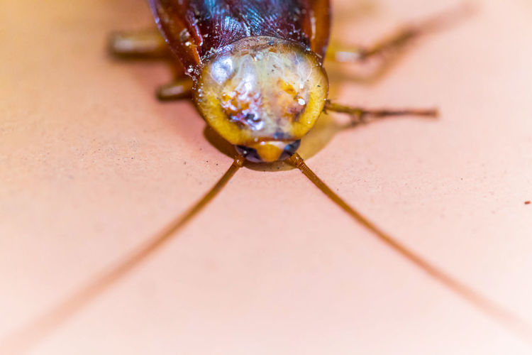Close-up of insect on floor