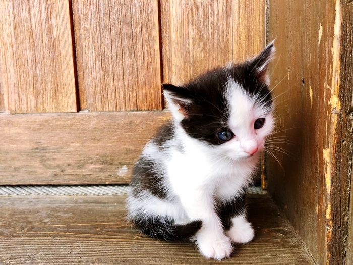 Kitty Kittens Of Eyeem Kitten Animal Themes Mammal Animal Domestic Pets One Animal Domestic Animals Cat Domestic Cat Feline Vertebrate No People Wood - Material Close-up Whisker Looking Day