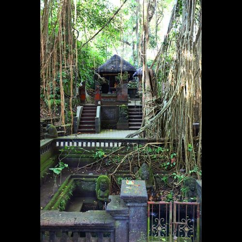 Architecture Bali Damaged Day Deterioration Green Color Monkey Forest Ubud Moss Nature Remote Tranquility Weathered