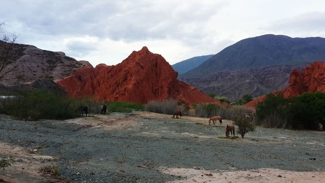 Landscape Mountain Horses Beauty In Nature Nature Reserve Extreme Terrain Norte Argentino Jujuy, Argentina Purmamarca No People Caballos