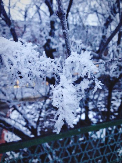 Cold Temperature Winter Weather Snow Nature Tree