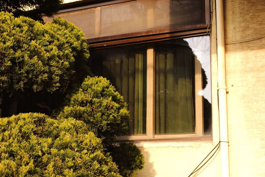 Growth Plant Built Structure Tree Window Architecture Motel Hotel Beige