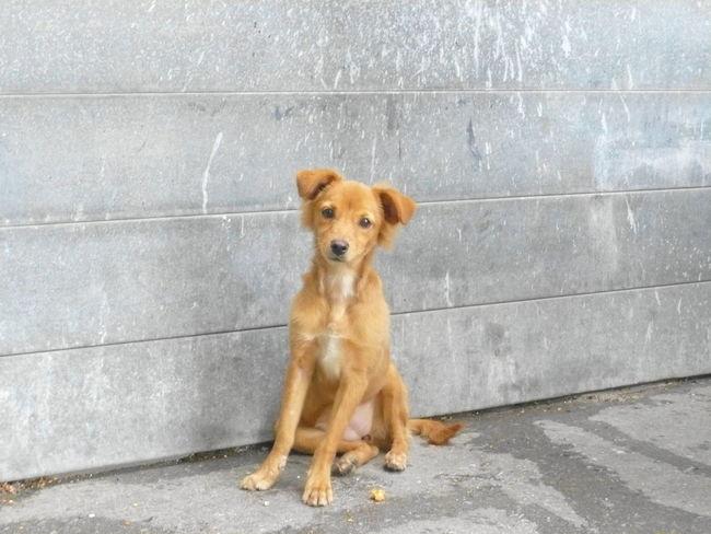 Animal Themes Cute Dog One Animal Outdoors Pets Sitting Cuba キューバ 犬 野良犬
