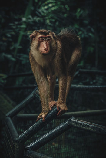 Monkey on metal railing