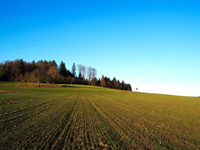 blue sky over field 2 Baden-Württemberg  Blue Color Green Color Agriculture Beauty In Nature Blue Blue Sky Clear Sky Day Field Germany Grass Growth Landscape Nature No People Outdoors Plowed Field Rural Scene Scenics Sky Tranquil Scene Tranquility Tree Wallpaper