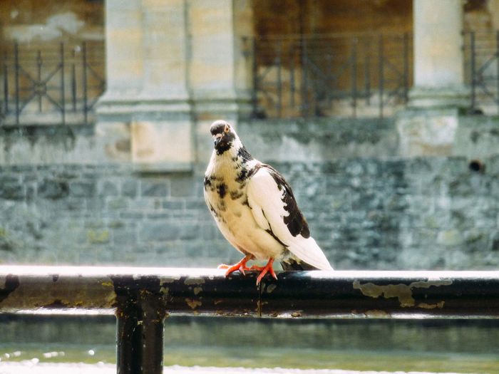 Bird Animal Themes Vertebrate One Animal Animals In The Wild Animal Animal Wildlife Perching Focus On Foreground Day Railing Architecture No People Built Structure Building Exterior Outdoors Close-up Window Full Length Nature